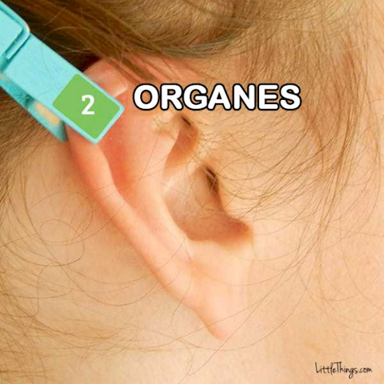 reflexologie-oreille-3
